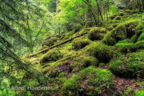 Wald im Gorges du Pichoux
