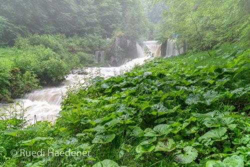 kleiner Wasserfall im Gorges zu Pichoux
