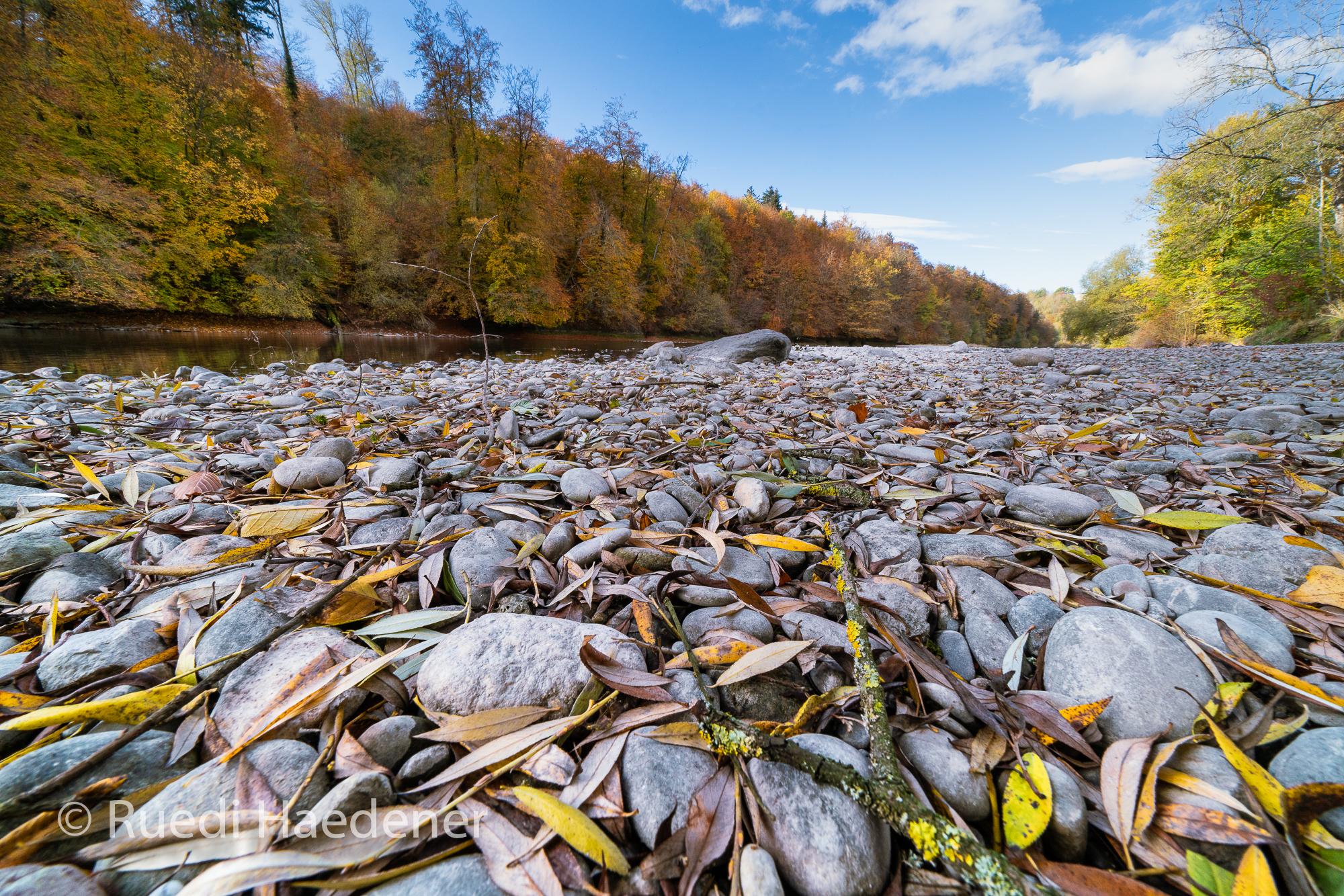 Herbst an der Aare