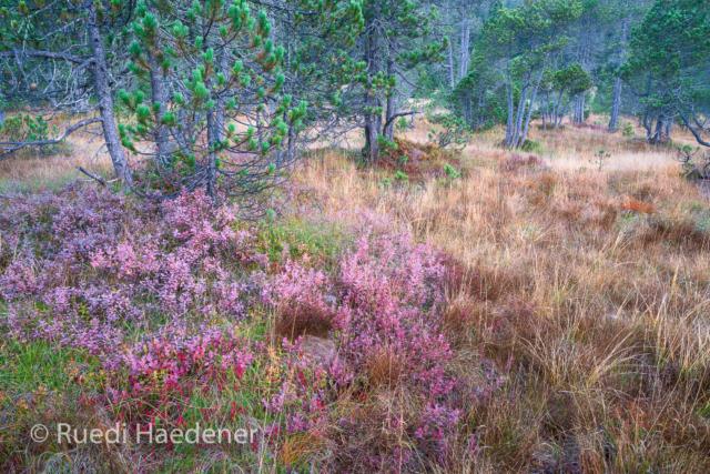 Moorlandschaft im Herbst