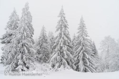Verschneite Bäume im Winter