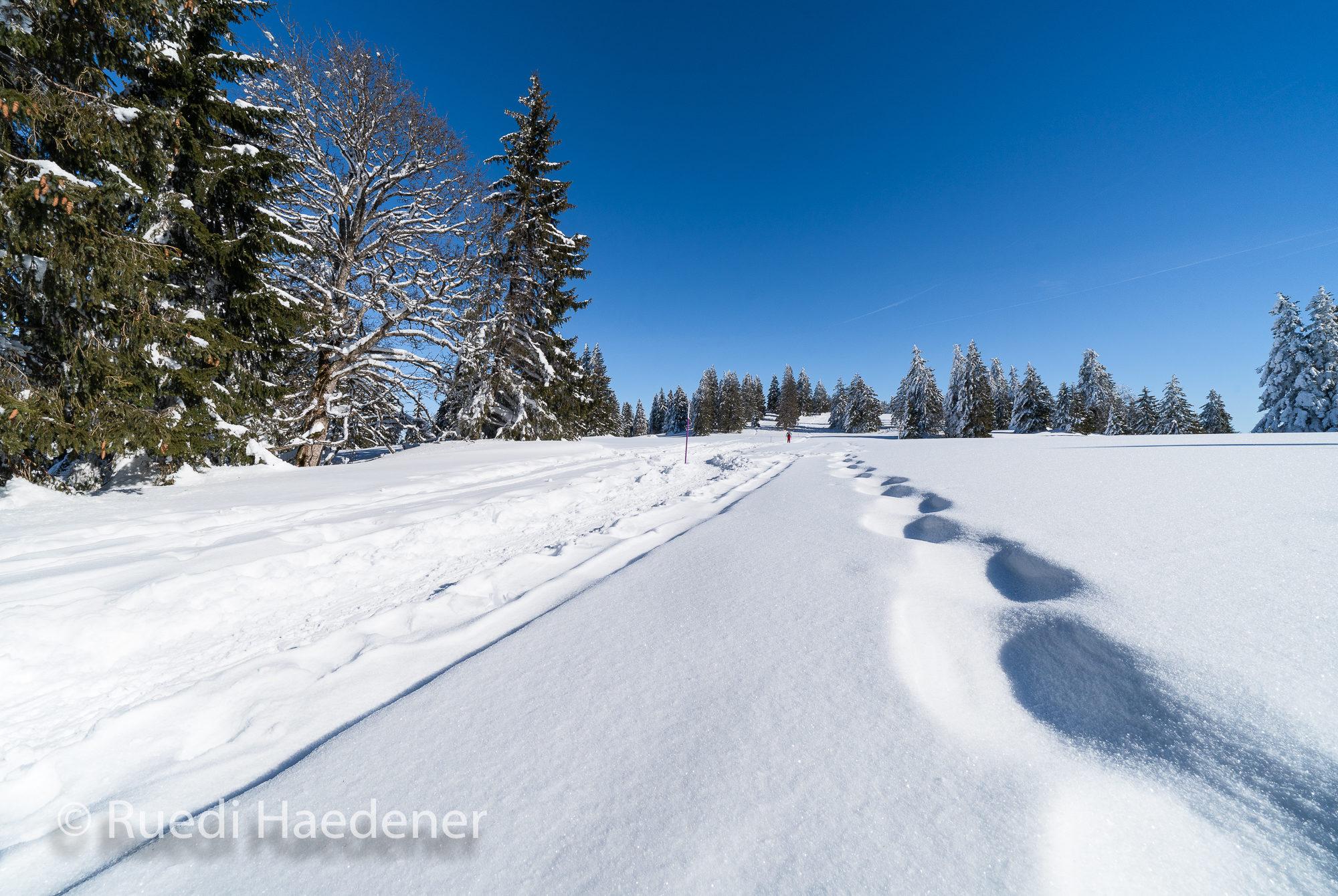 Schneeschuh-Trail im Jura