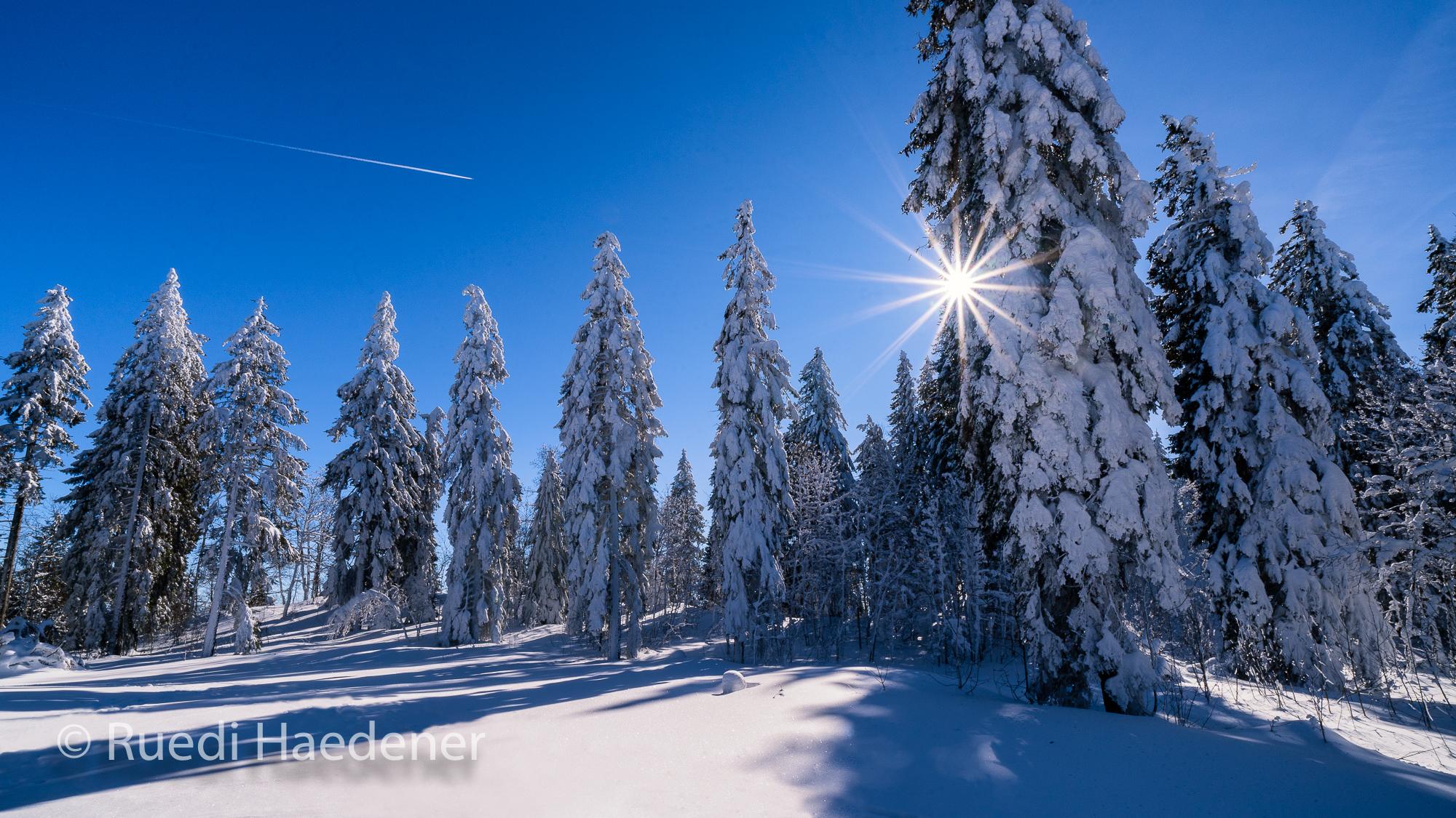 Schnee im Jura mit verschneiten Bäumen