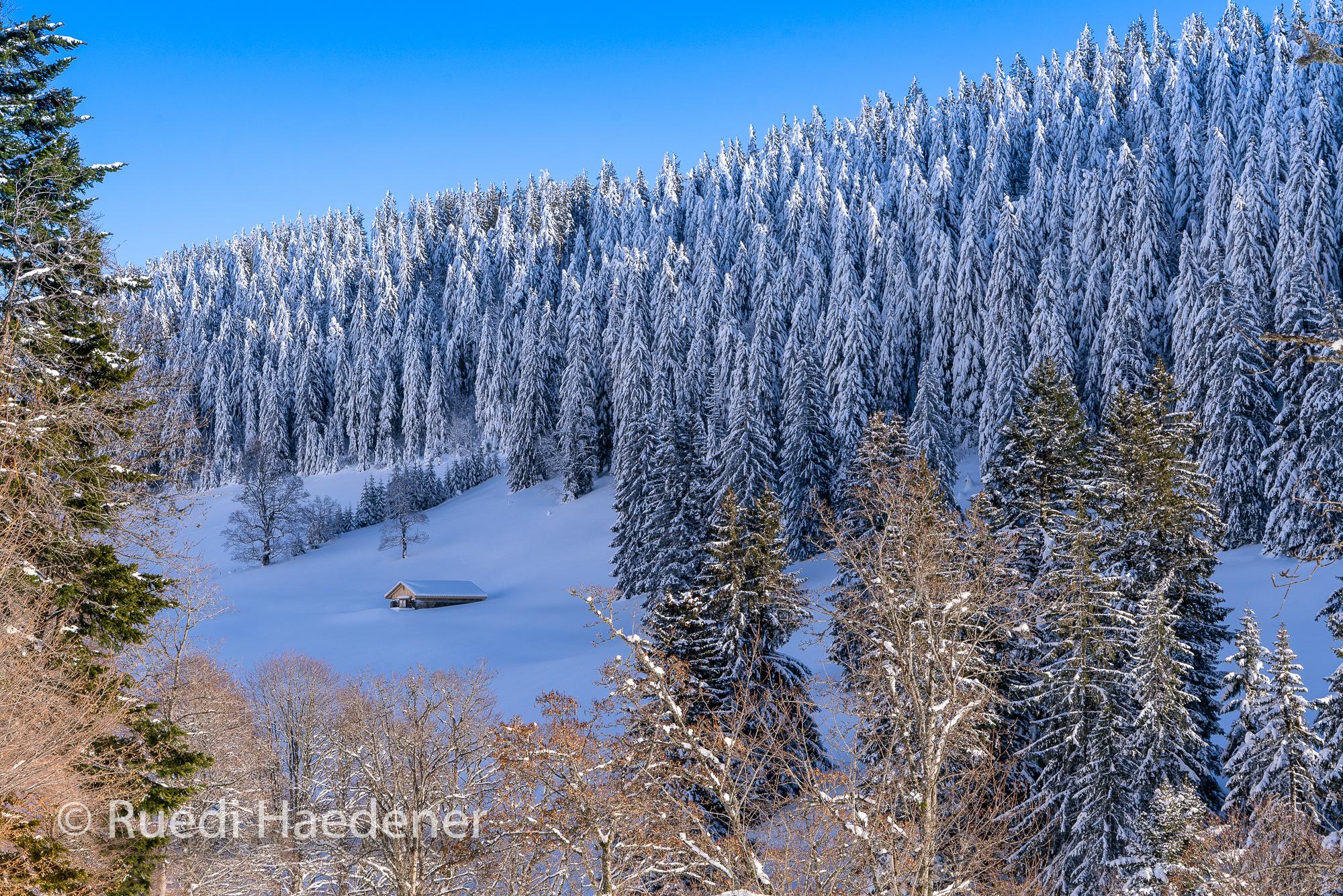 Winterwald im Jura