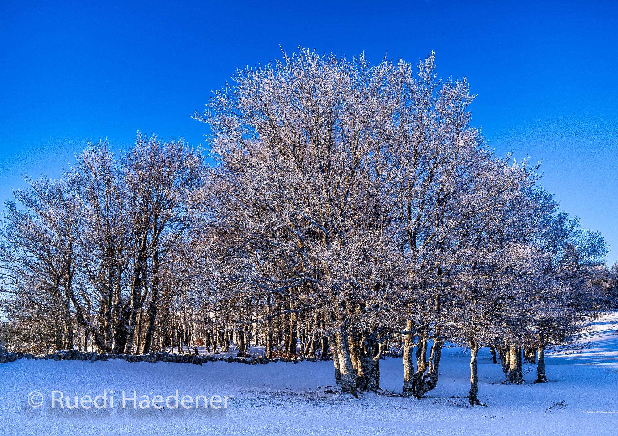 Winterliches Wäldchen